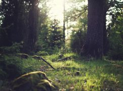 How Being in Nature Impacts Your Health and Wellbeing