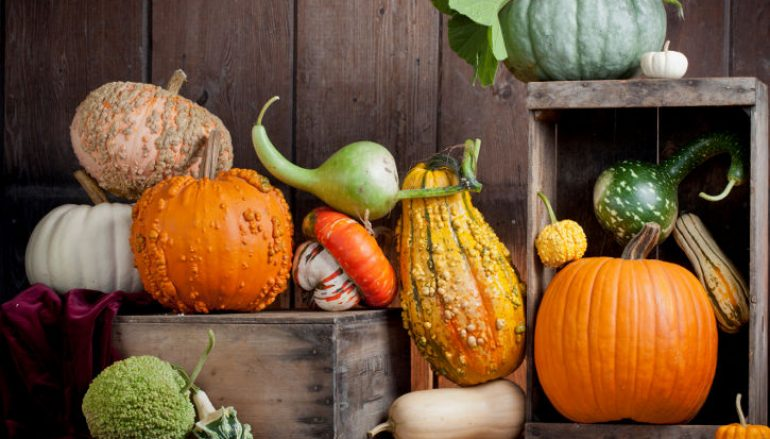 For the Love of (Winter) Squash!