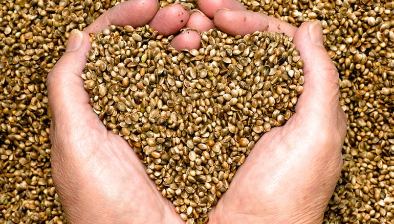 7 Plant Based Superfoods You Aren't Eating