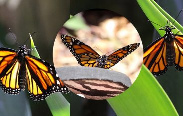 Transformation:  Just When the Caterpillar Thought Her Life Was Over, She Became A Butterfly