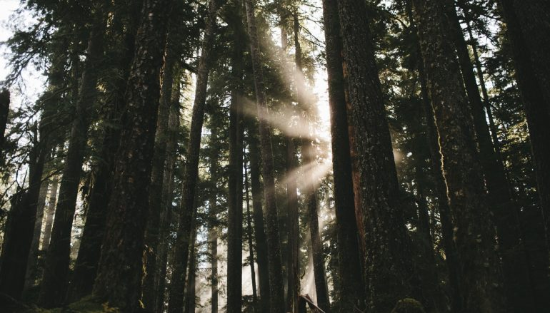 Shining A Light On Anxiety