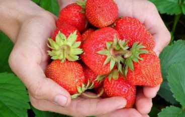 Stress, Struggle & Strawberries: Inquire Within