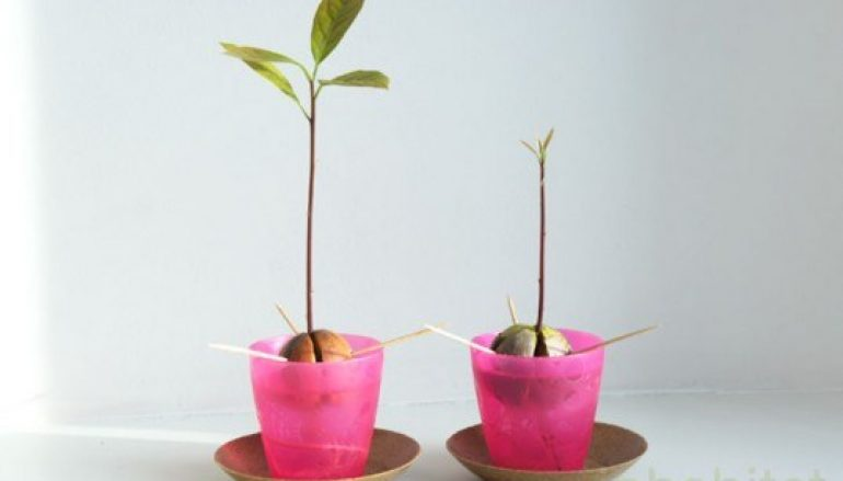 #Me Too, Your Soul, and an Avocado Seed