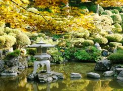 How to Create a Tranquil Garden